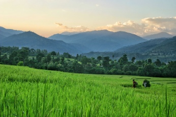 Nepal Jogatar Rice Field Sunset