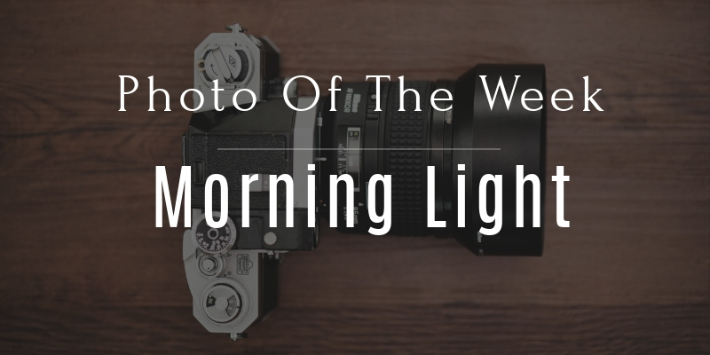 Photo Of The Week: Morning Light